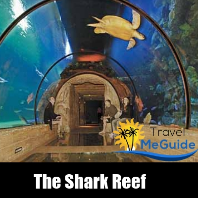 Visit The Shark Reef